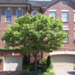Pro Grounds Tree and Shrub Pruning Services